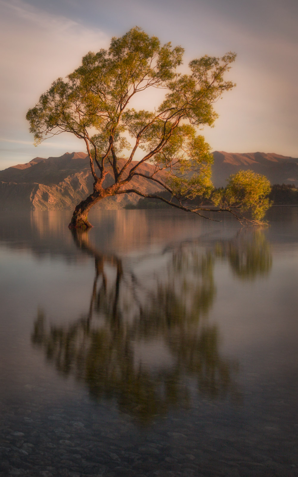 landscape-wanaka-tree-new-zealand