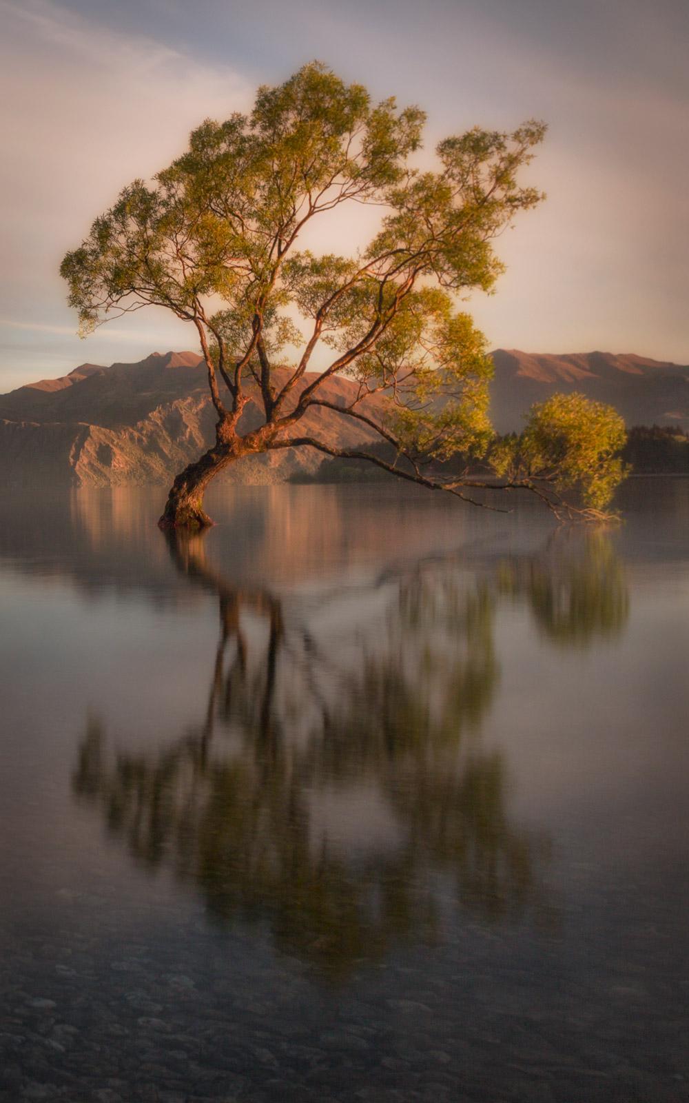 That Wanaka tree, has grown up all alone in Lake Wanaka, New Zealand.