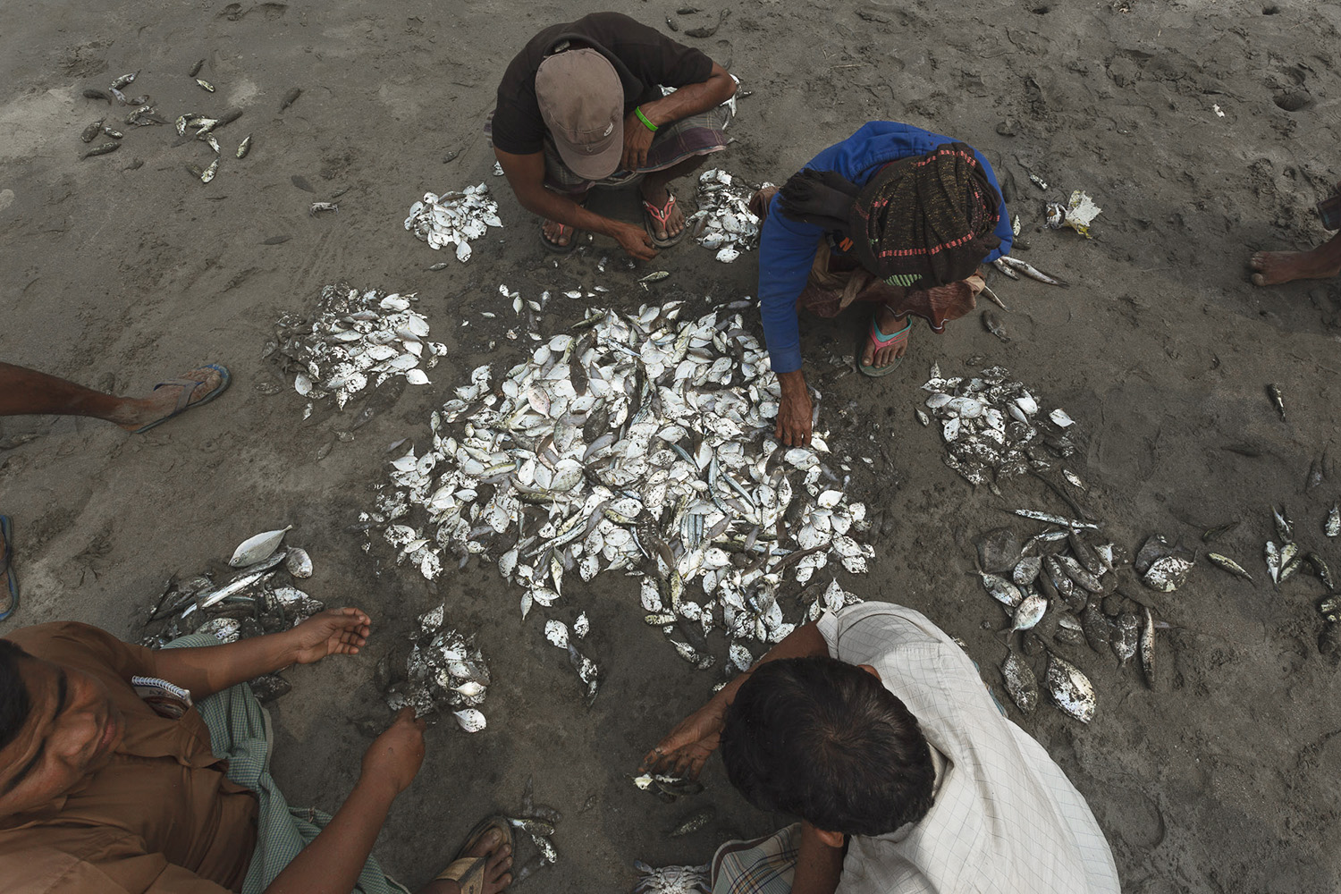 Sorting out the caught fish at Bay of Bengal Cox's Bazar Bangladesh fish