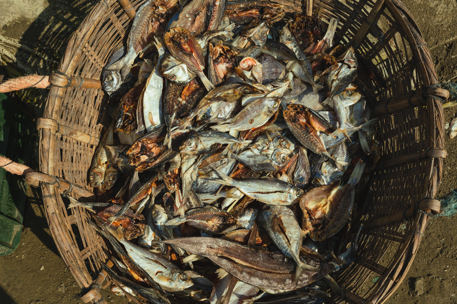 Cleaned fish prepared for the next stage of the manufacturing process at Dhaka - Bangladesh Dried Fish Village.