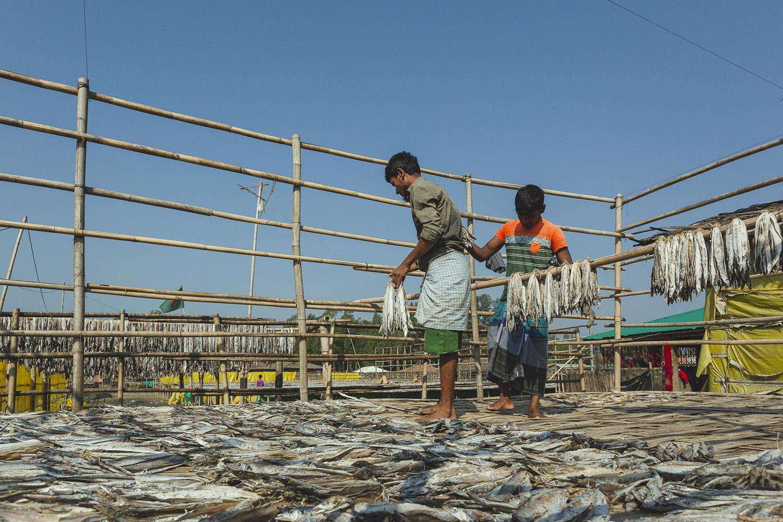 Workers hanging fish on wooden rods at Dhaka - Bangladesh Dried Fish Village.