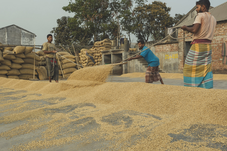 Shoveling and guiding rice into collection piles at Dhaka, Bangladesh Rice Mills.