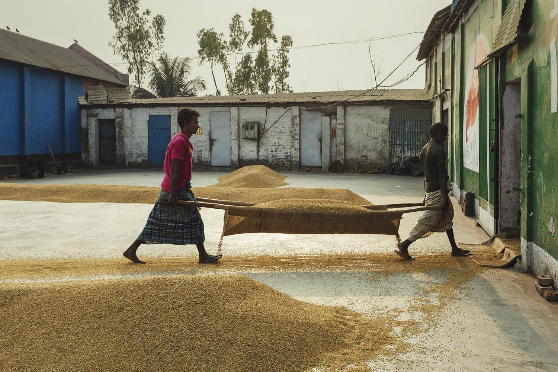 Men transporting rice inside at Dhaka, Bangladesh Rice Mills.