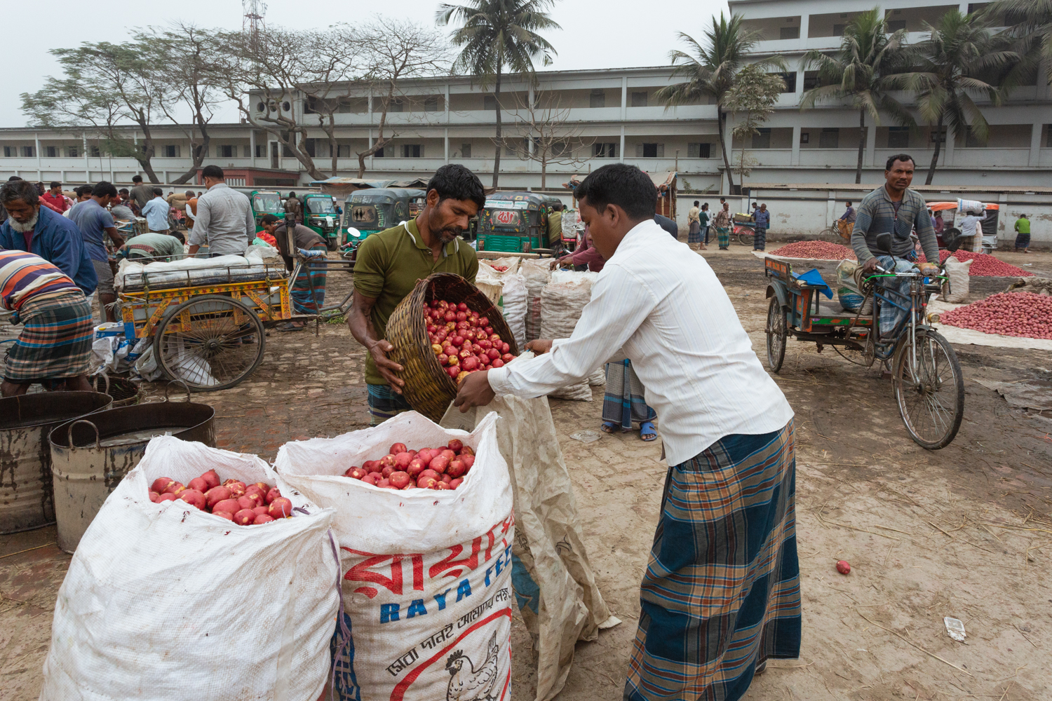 Bagging vegetables so they can be poured out for display to buyers at Dhaka, Bangladesh Vegetable Markets.