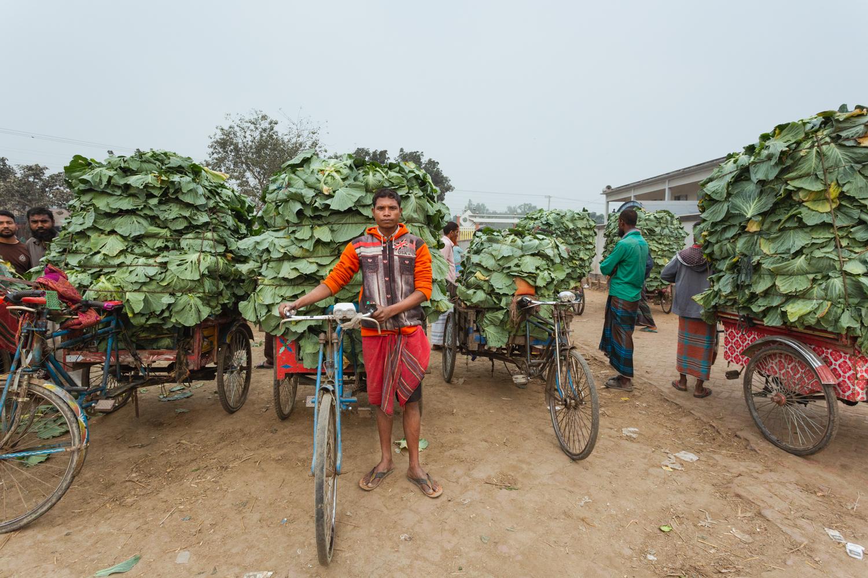 Transporting vegetables to Dhaka, Bangladesh Vegetable Market using bicycle carts.
