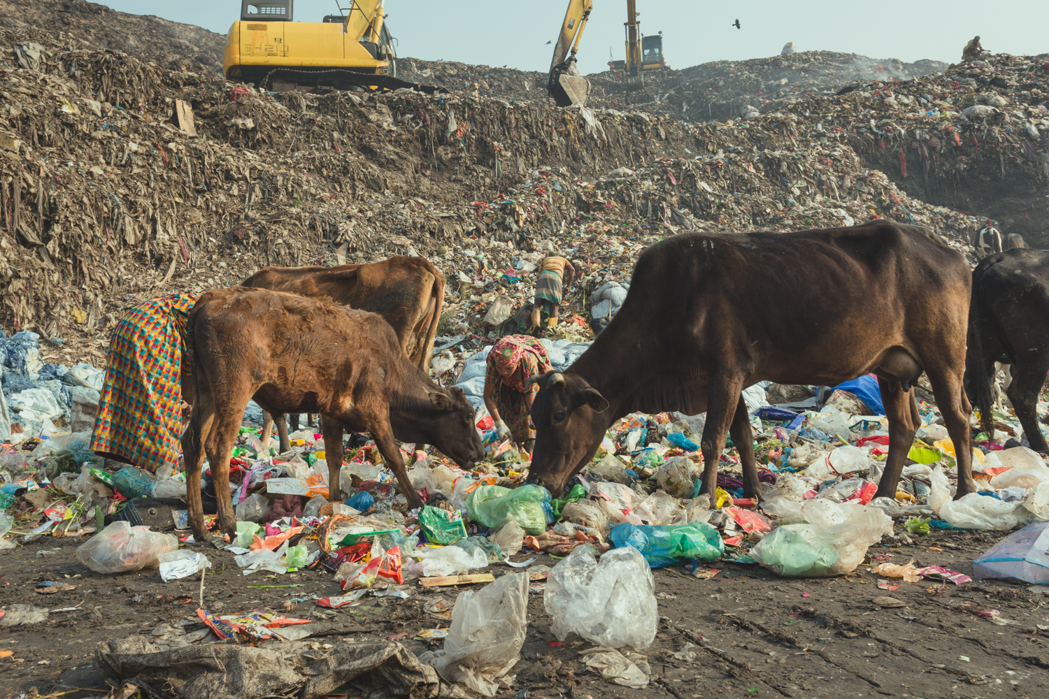 Alongside starving animals, the waste pickers of Chittagong, Bangladesh scour through waste to earn their income.